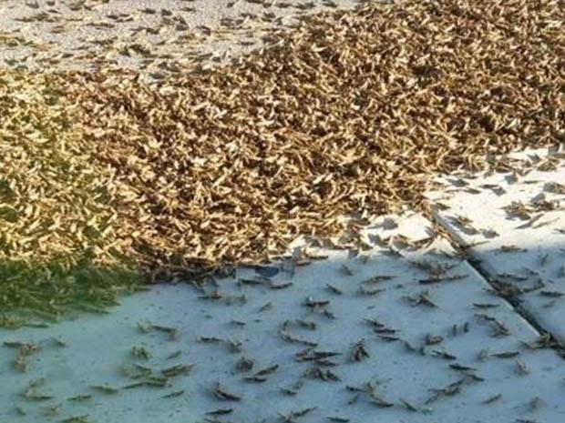 Let's Swarm Together